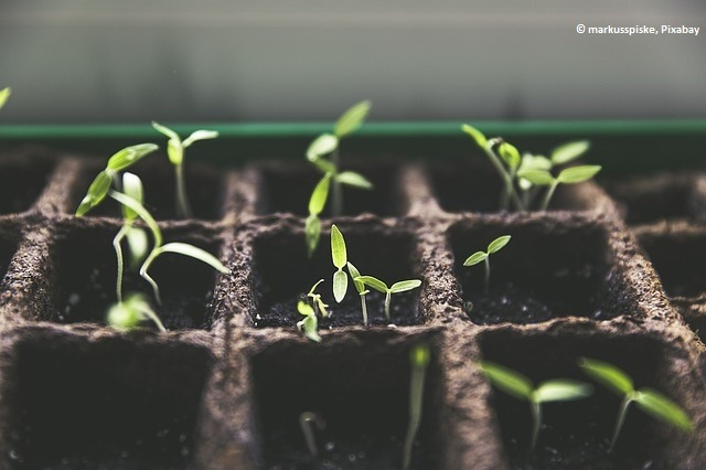 plant-1474807_640