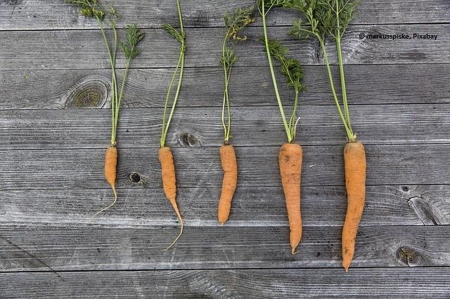 vegetables-1666632_640