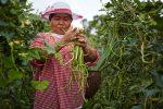 Chiliproduzentin Khun Orapin aus Thailand